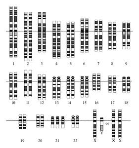 Chromosomenkaart